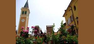 Organizzazione della mostra mercato di piante rare e ornamentali Verdepiano, a San Giorgio di Piano